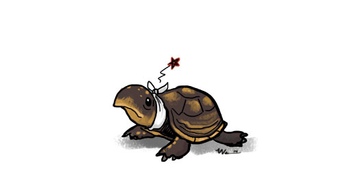turtleache