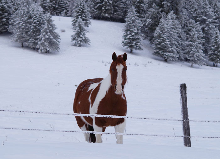 painthorse